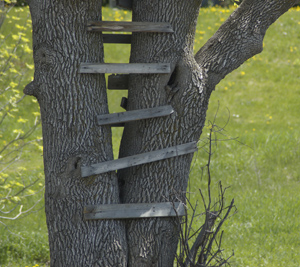 tree-house-ladder.jpg