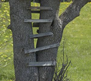 tree-house-ladder.jpg