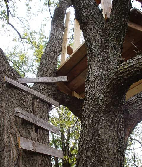 tree2lg