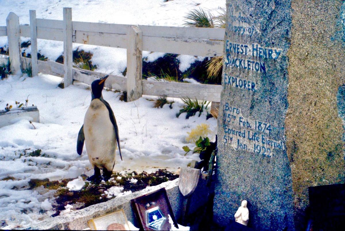 Shackleton's Spirit Penguin
